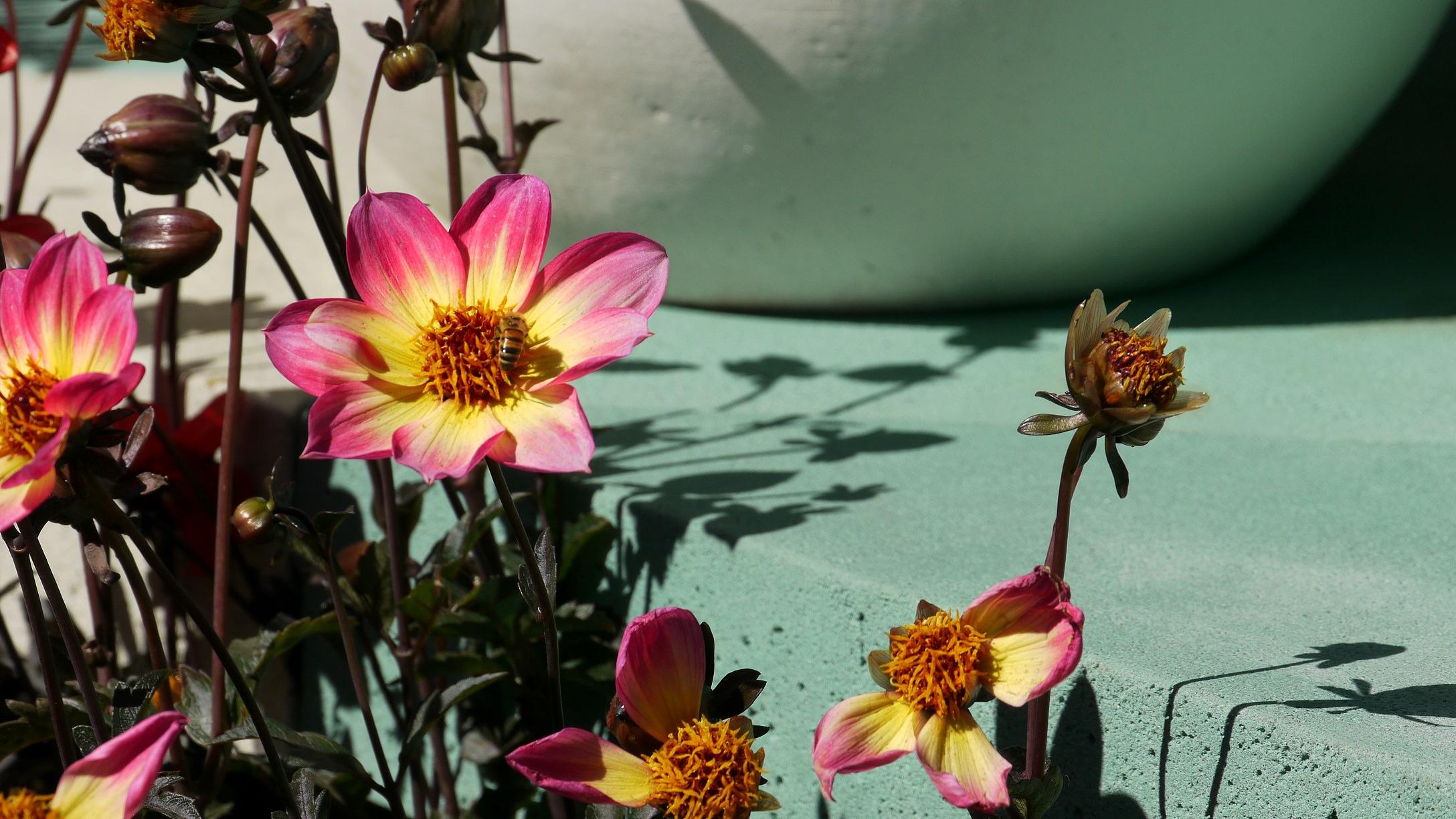 MIFGS 2014 Phillip Withers Landscape Design - Flowers